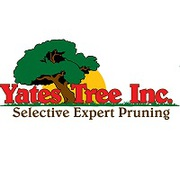 Professional Tree trimming Service in San Antonio | Yates Tree Inc